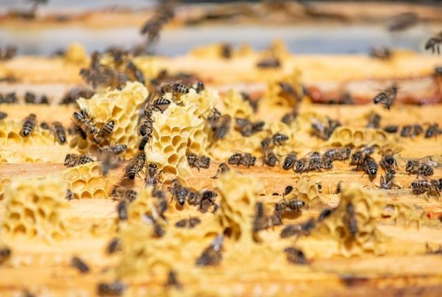 What are some pest control methods for wasp removal