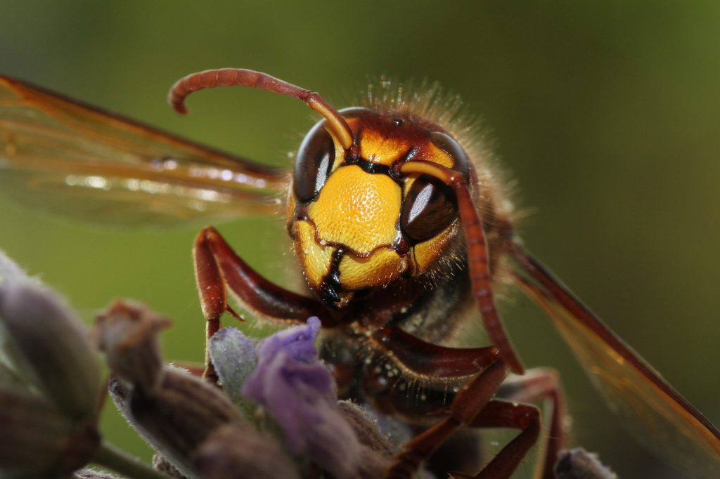 When to call a hornet or wasp exterminator