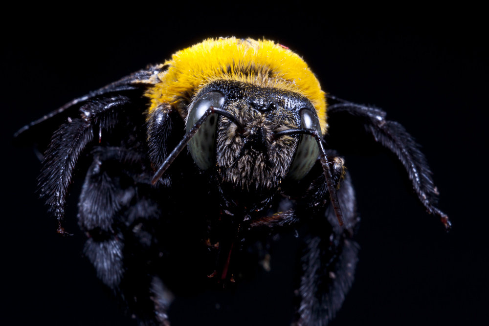 Why you need to plug up carpenter bee holes