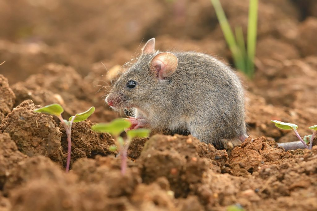 Are There Any Repellent Solutions for Mice on the Market