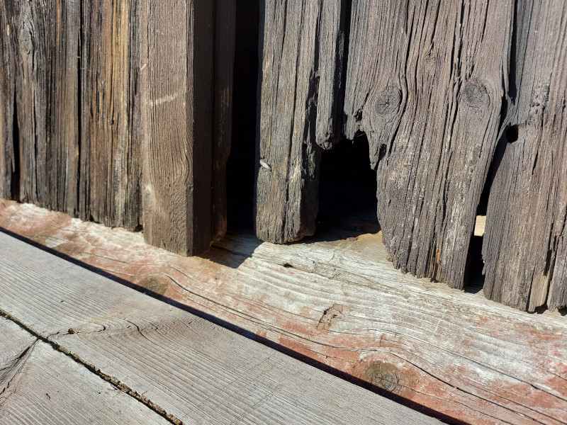 How do I Conduct an Exterior Inspection for Mice