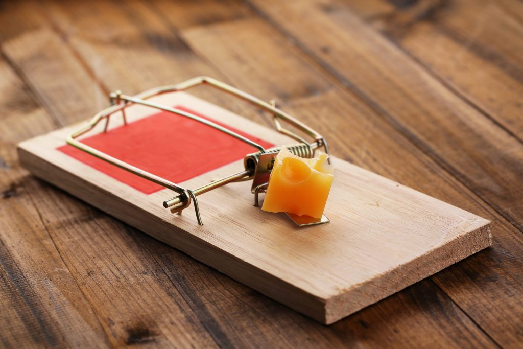 Mouse Trap Mistakes that you are Making