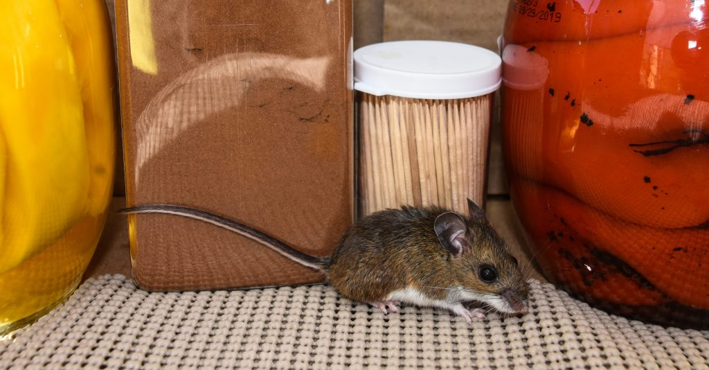 Types of Businesses Susceptible to Mice Infestations